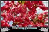 "Grundig 43GEF6950B 43"" 109 Ekran Uydu Alıcılı FHD Smart TV ( OUTLET )"